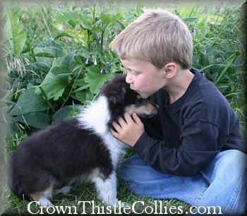 Collies are exceptional dogs with children and make excellent Assistance and Therapy dogs.