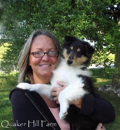 Tri Color Collie Puppy